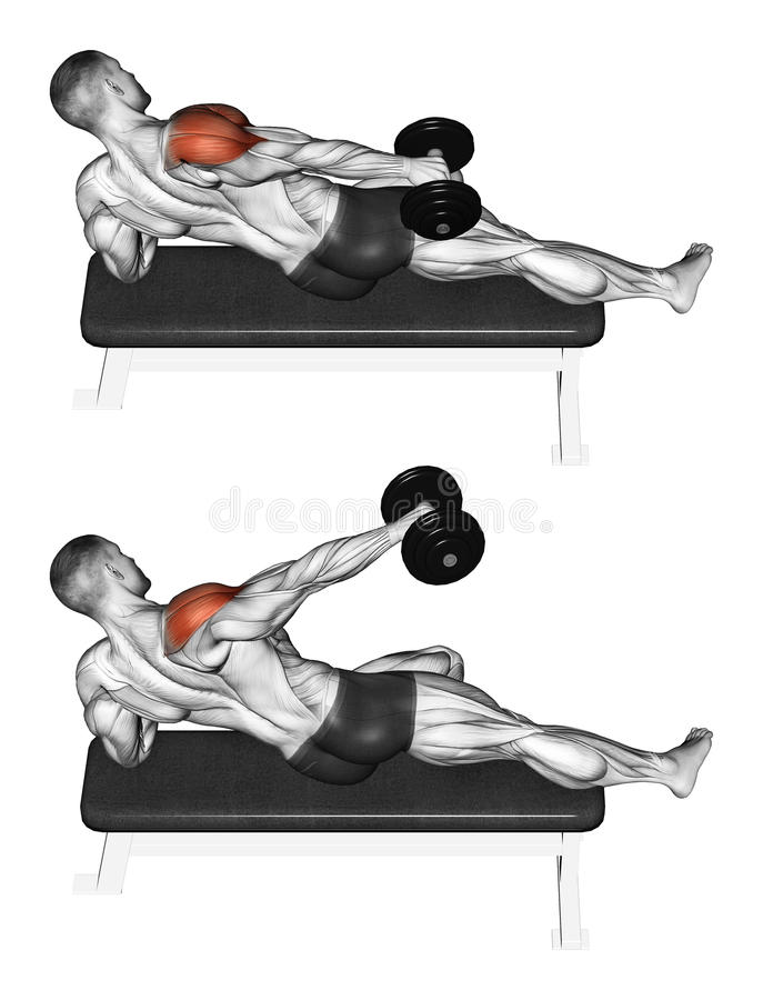 Exercising. Lifting a dumbbell in one hand side, l. Lifting a dumbbell in one hand side, lying on its side. Exercising for bodybuilding. Target muscles are royalty free illustration