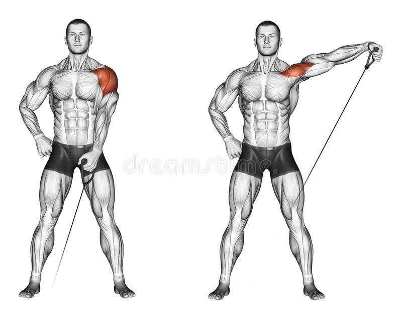 Exercising. Lifting his hands to the side with the. Lifting his hands to the side with the lower block, lying on the bench. Exercising for bodybuilding. Target royalty free illustration