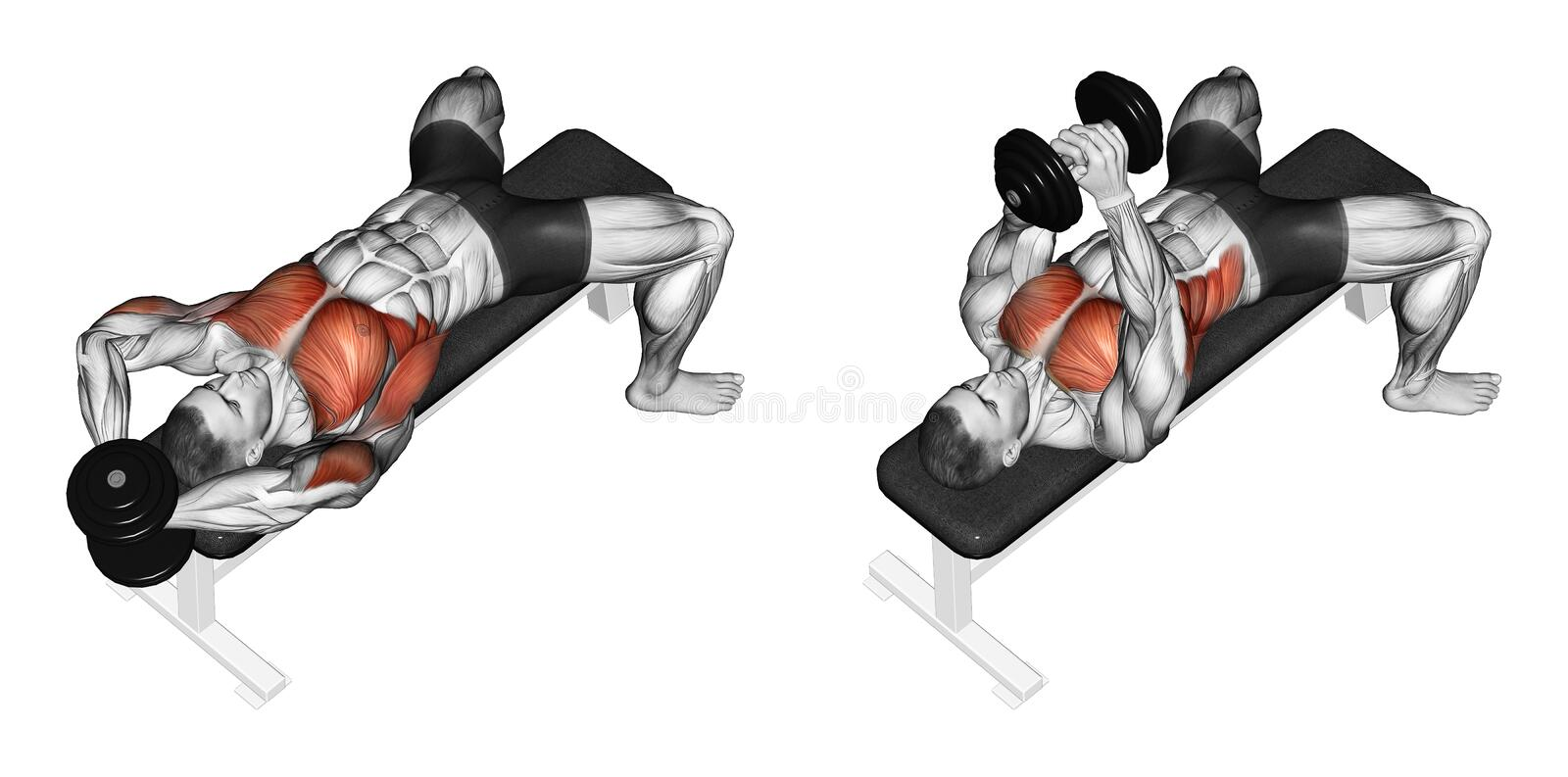 Exercising. Link dumbbells from behind the head. Link dumbbells from behind the head. Exercising for bodybuilding Target muscles are marked in red. Initial and stock illustration