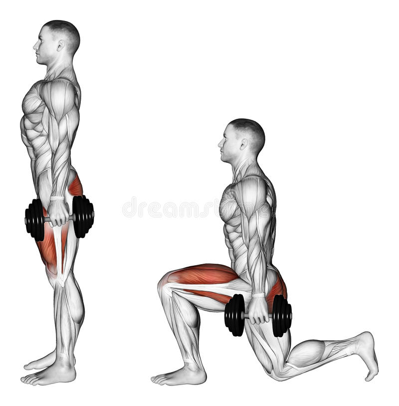 Exercising. Lunges with dumbbells. Lunges with dumbbells. Exercising for bodybuilding. Target muscles are marked in red. Initial and final steps vector illustration