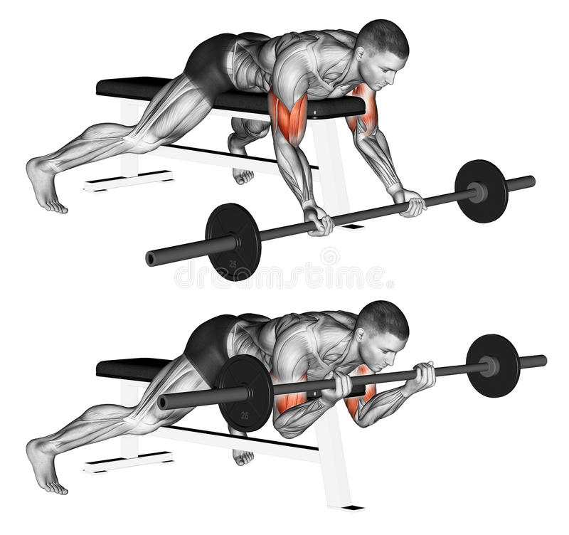 Exercising. Lying high bench barbell curl stock image