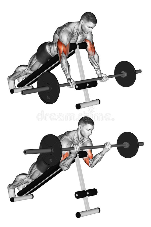 Exercising. Lying incline curl royalty free stock image