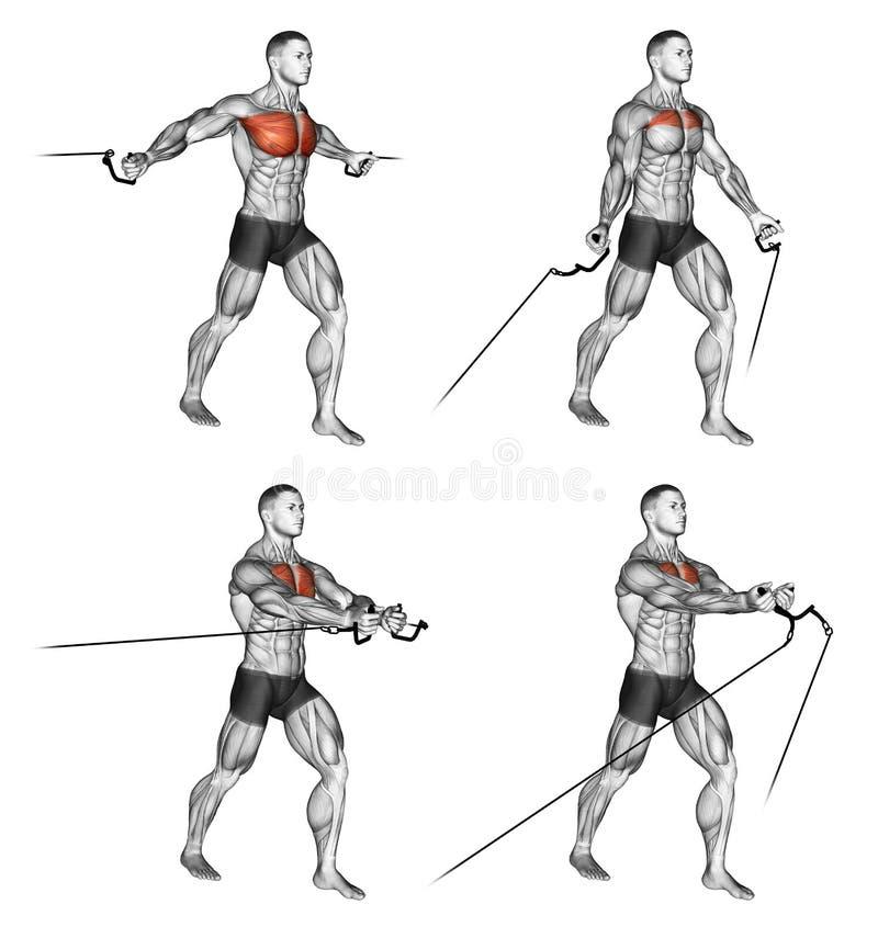 exercising Mosca media y baja del cable stock de ilustración