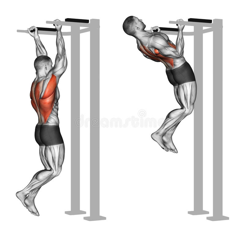 exercising Omgekeerde greep trekkracht-UPS op de achterspieren vector illustratie