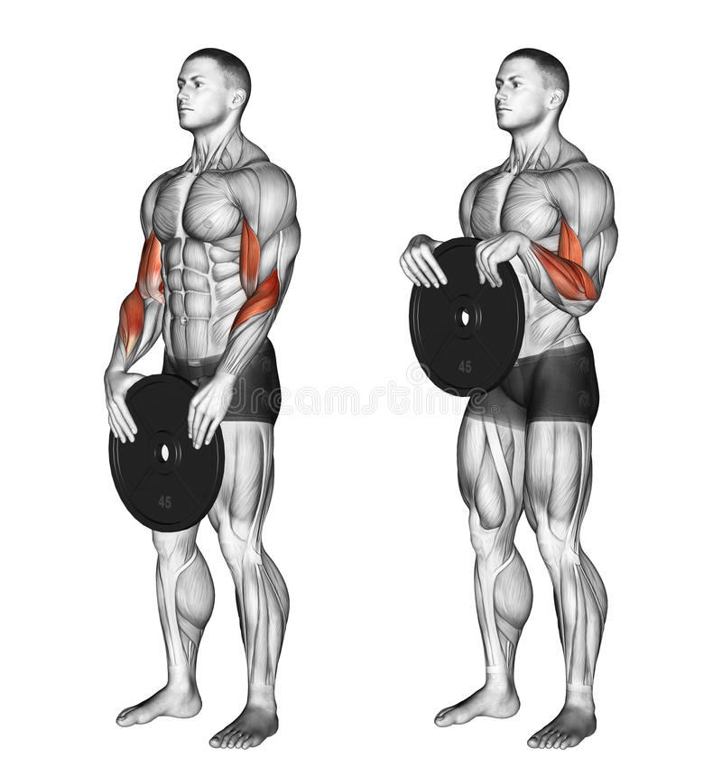 exercising Omgekeerde plaatkrullen vector illustratie