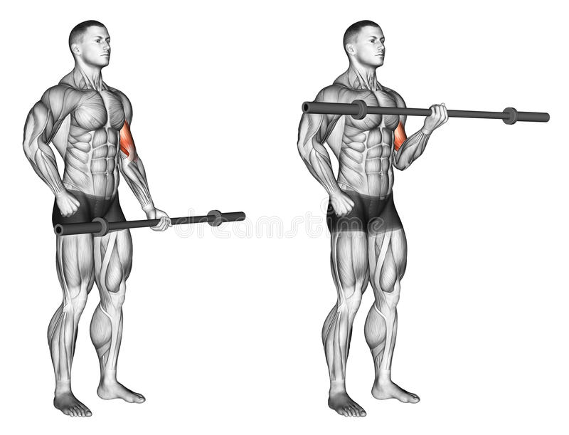 Exercising. One arm biceps curl with olympic bar royalty free stock photography