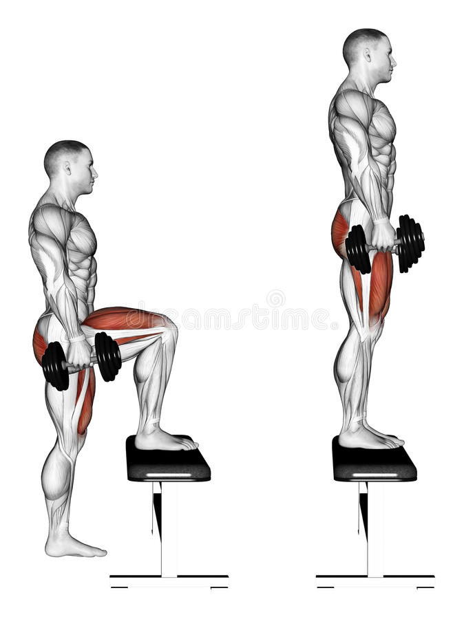 Exercising. Pacing with dumbbells on bench. Pacing with dumbbells on bench. Exercising for bodybuilding. Target muscles are marked in red. Initial and final royalty free illustration
