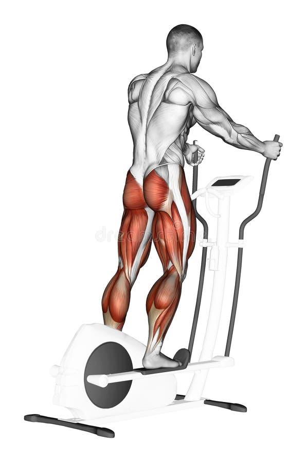 exercising Paseo en el instructor elíptico stock de ilustración