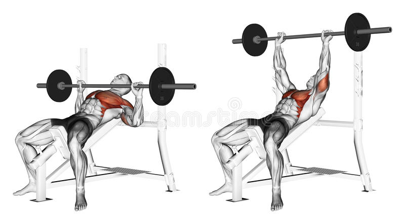 Exercising. Press of a bar, lying on an incline be. Press of a bar, lying on an incline bench. Exercising for bodybuilding. Target muscles are marked in red vector illustration