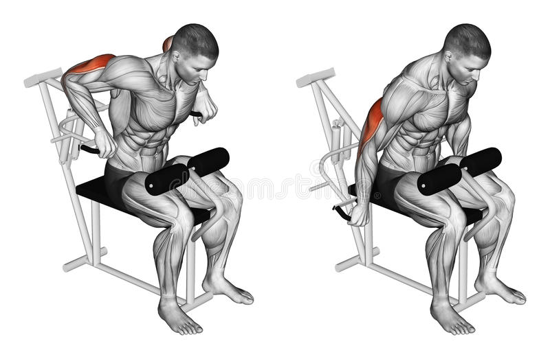Exercising. Presses in simulator on triceps muscle. Presses in simulator on triceps muscle, lying on the bench. Exercising for bodybuilding. Target muscles are stock illustration