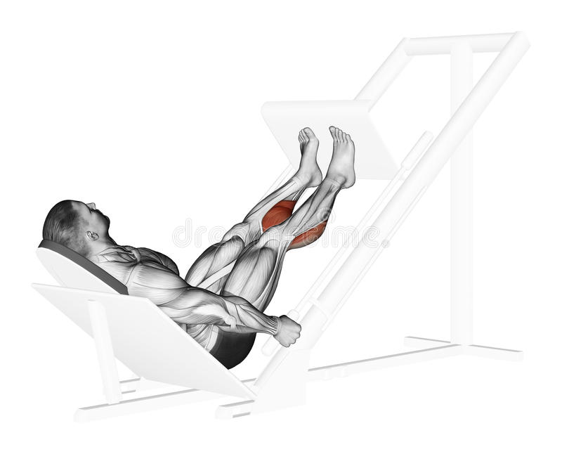 Exercising. Presses the soles of the simulator. Presses the soles of the simulator. Exercising for bodybuilding Target muscles are marked in red vector illustration