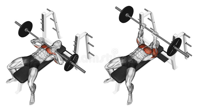 Exercising. Rod narrow grip bench press, lying on. Rod narrow grip bench press, lying on the bench. Target muscles are marked in red. Initial and final steps stock illustration