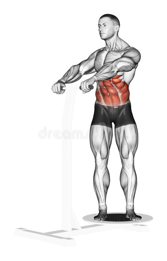 Exercising. The rotation of the trunk, standing on. The rotation of the trunk, standing on the simulator Twist. Exercising for bodybuilding Target muscles are royalty free illustration