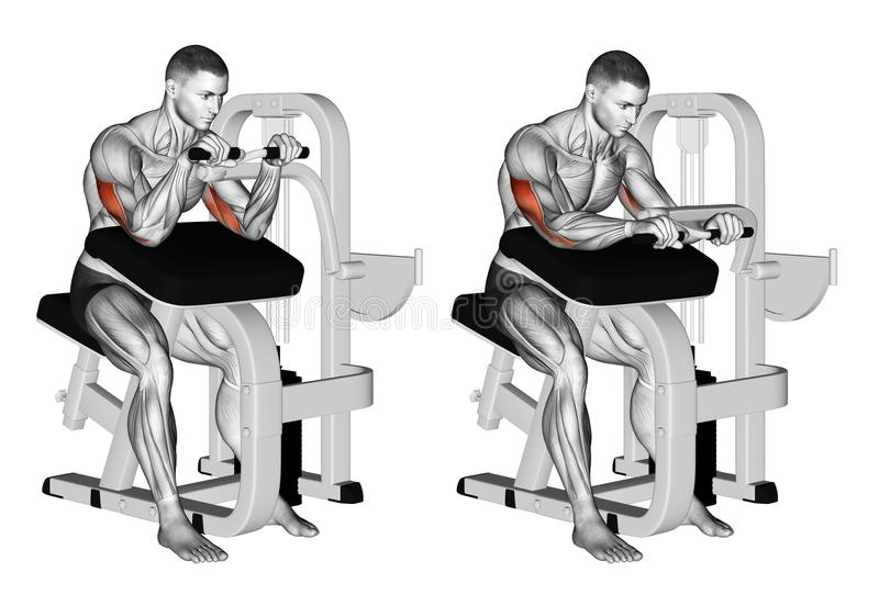 Exercising. Selectorized Triceps Extension stock photo