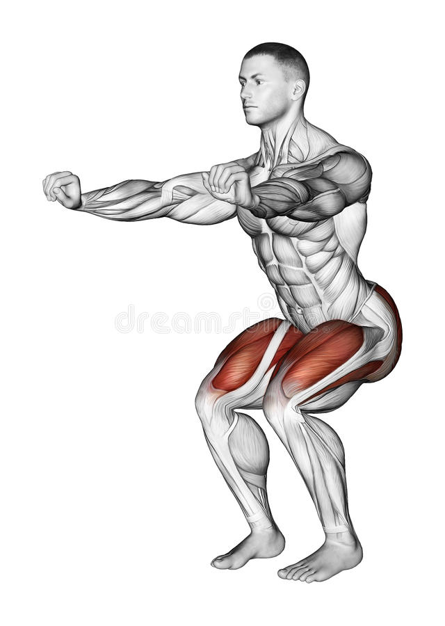 Exercising. simple squats royalty free illustration