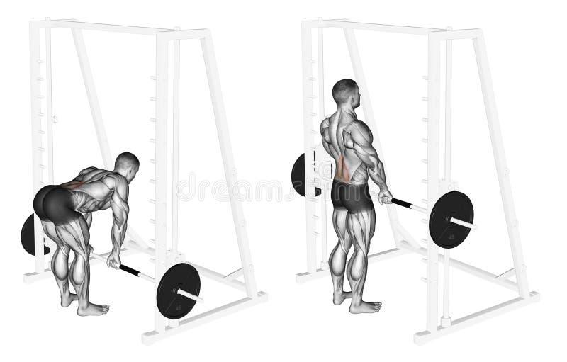 Exercising. Smith Machine dead lifts stock photos