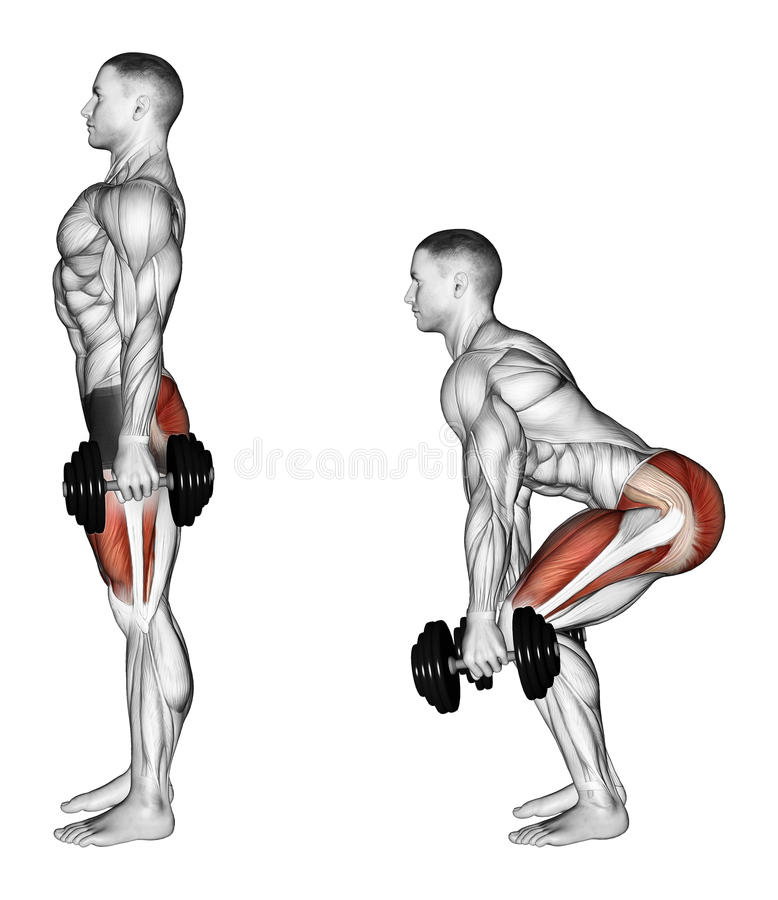Exercising. Squats with dumbbells. Squats with dumbbells. Exercising for bodybuilding Target muscles are marked in red. Initial and final steps royalty free illustration