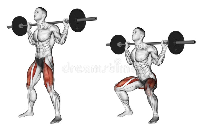 Exercising. Squats on the shoulders royalty free illustration
