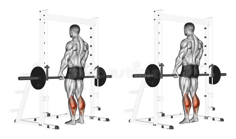 exercising Stijging op tenen met een barbell vector illustratie
