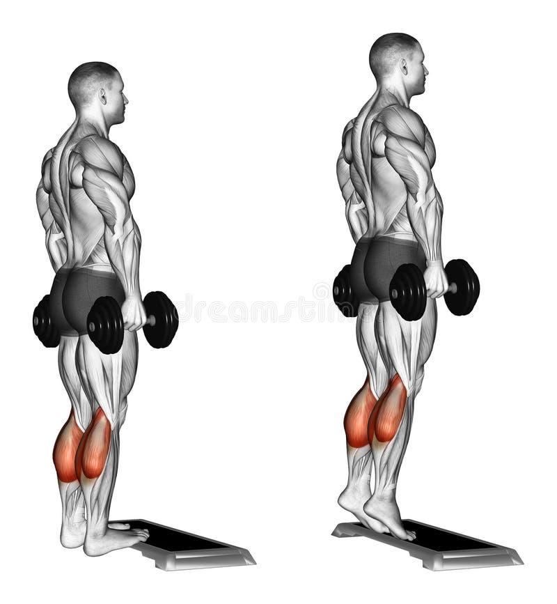 exercising Subida en los dedos del pie que se colocan en la plataforma ilustración del vector