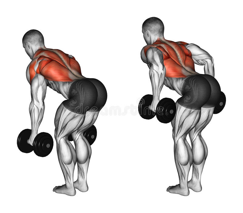 Exercising. Thrust dumbbells in the slope. Thrust dumbbells in the slope. Exercising for bodybuilding. Target muscles are marked in red. Initial and final steps stock illustration