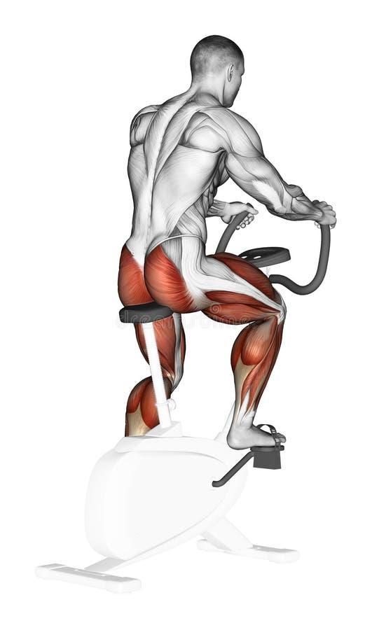 Free Exercising. Training On A Stationary Bike Stock Image - 44124211