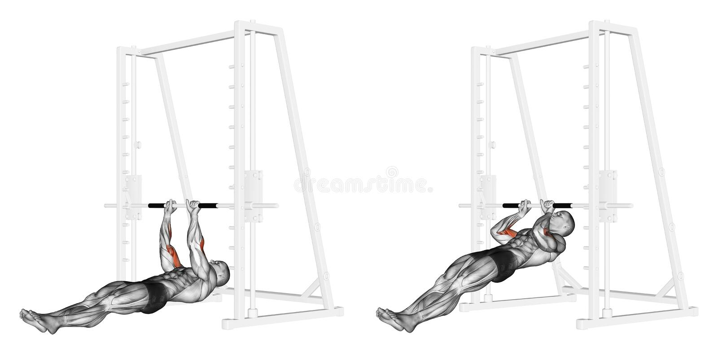 exercising Trekkracht-UPS op brachialis royalty-vrije illustratie