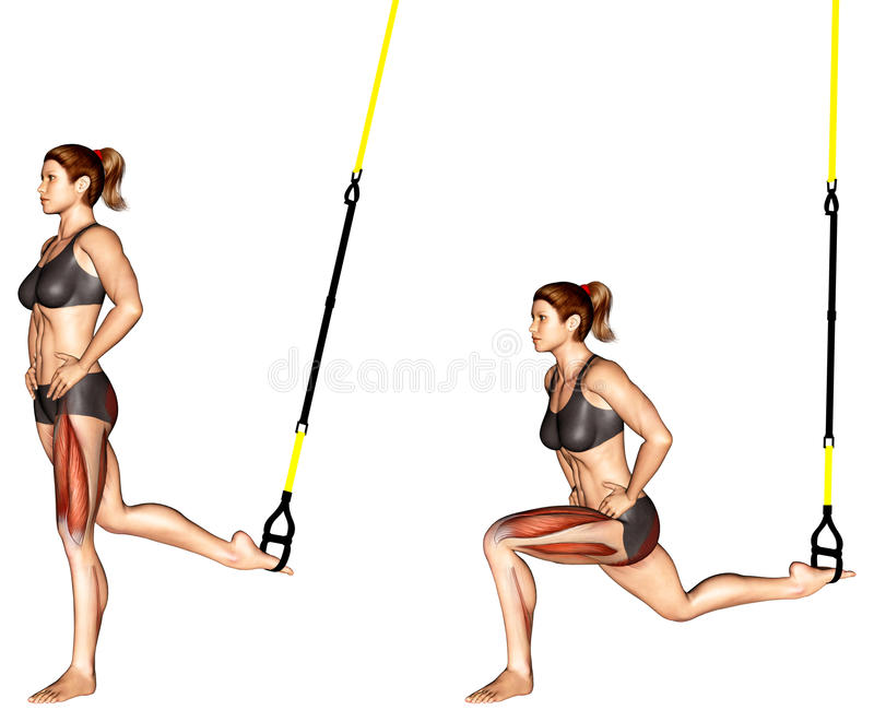 Exercising. TRX Suspender Single Leg Split Squat. TRX Suspender Single Leg Split Squat. Exercising for bodybuilding Target muscles are marked in red royalty free illustration