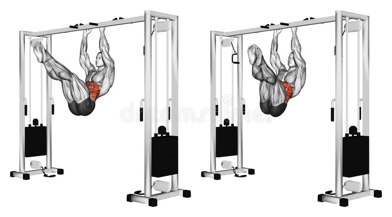 Exercising. Turns hips on the stick the overhang. Turns hips on the stick the overhang. Exercising for bodybuilding Target muscles are marked in red vector illustration