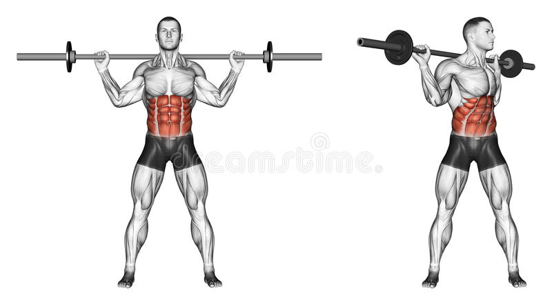 Exercising. Turns torso with barbell. Turns torso with barbell. Exercising for bodybuilding Target muscles are marked in red. Initial and final steps vector illustration