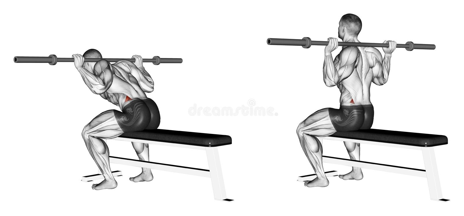 Download Exercising. Ups With A Good Morning Sitting Stock Illustration - Image: 43667062
