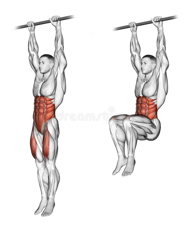 Exercising. Ups knees. Ups knees. Exercising for bodybuilding Target muscles are marked in red. Initial and final steps stock illustration