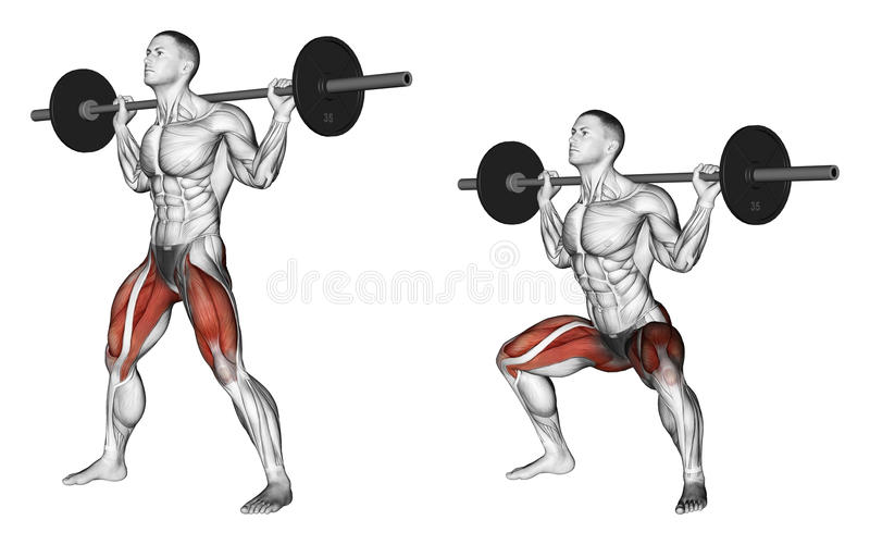 Exercising. Wide squats on his shoulders. Wide squats on his shoulders. Exercising for bodybuilding Target muscles are marked in red. Initial and final steps royalty free illustration