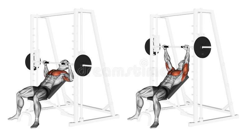 exercitar Declive Smith Machine Bench Press ilustração stock