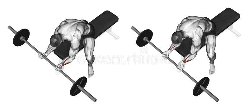 exercitar Flexão do pulso com um undergrip do barbell