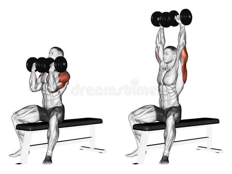 exercitar Imprensa de banco alterna do peso com giro do pulso ilustração do vetor