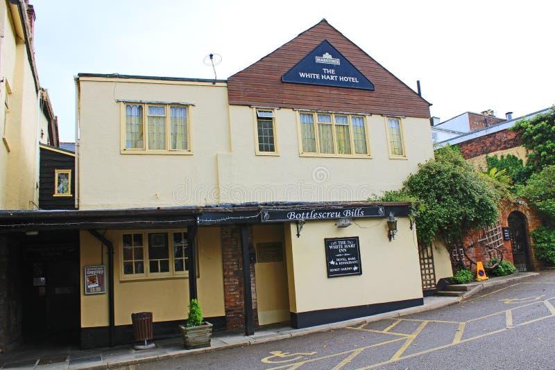 Exeter, la parte posterior del ciervo blanco foto de archivo