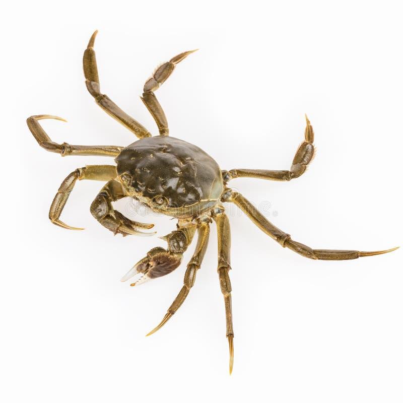Exhalez la bulle du crabe vivant photographie stock libre de droits