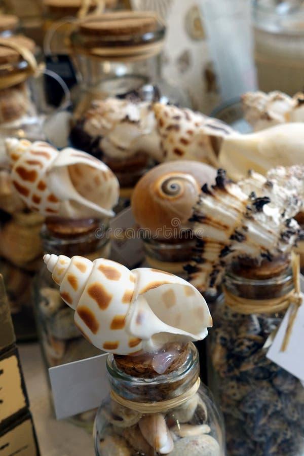 Exhibición de las cáscaras hermosas del mar del punto del leopardo en una tienda de regalos fotografía de archivo libre de regalías
