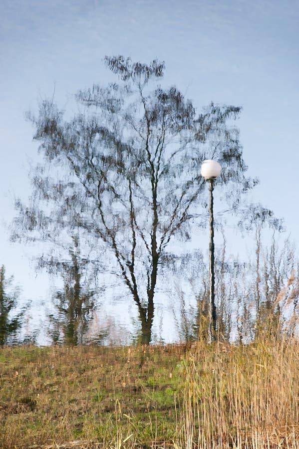 Exhibición de una linterna y un árbol en agua fotografía de archivo