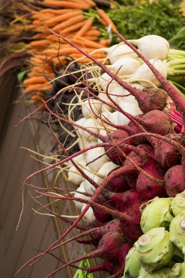 Exhibición de varios rábanos y zanahorias de las verduras de raíz en Brigh imagenes de archivo