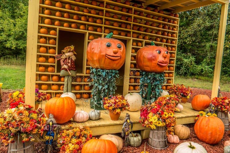Exhibición decorativa de la calabaza en otoño fotografía de archivo