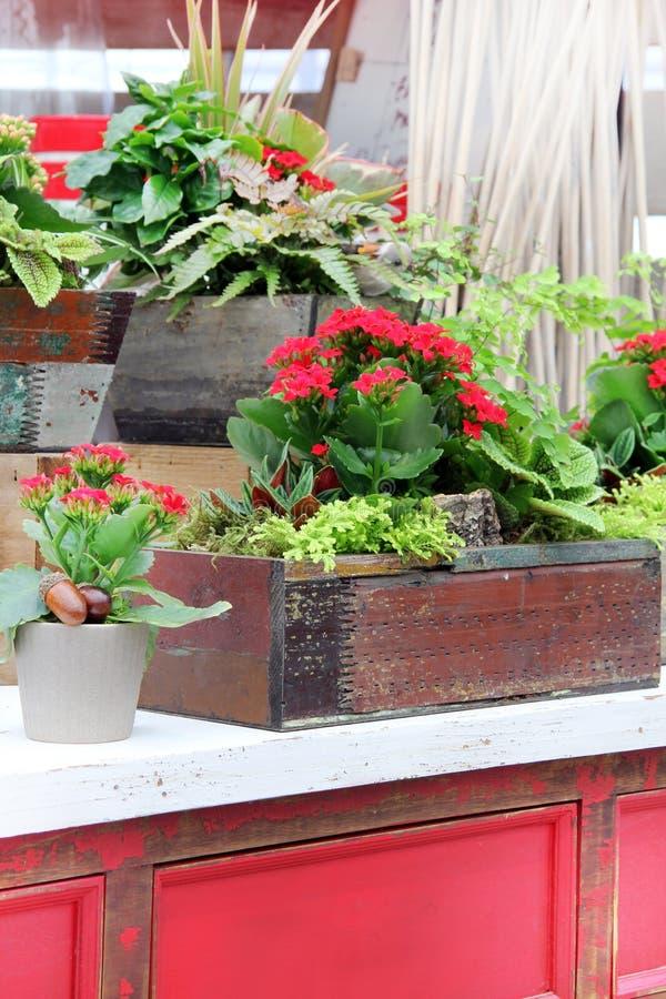 Exhibición floral de guardería en colores otoñales imagenes de archivo