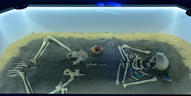Exhibition of the burial of a prehistoric human in a museum container royalty free stock images
