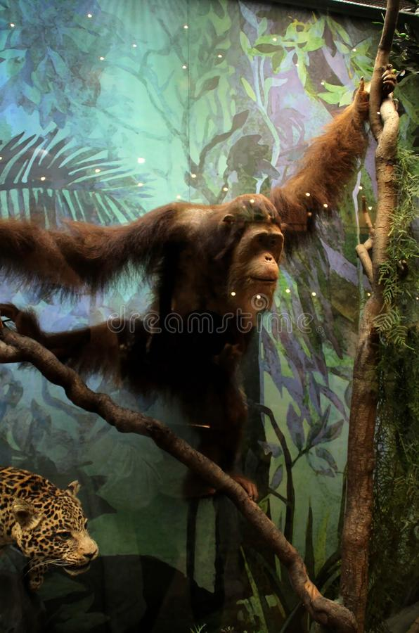 Exhibits of the State Darwin Museum. Inhabitants of tropical forests. royalty free illustration