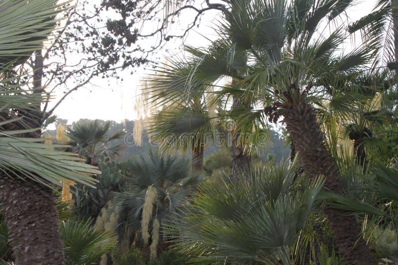 Exhuberant-Wald von Palmen lizenzfreie stockfotografie