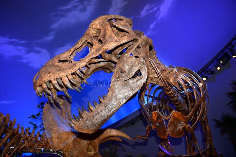 Exibição do dinossauro no museu das crianças em Indianapolis foto de stock royalty free