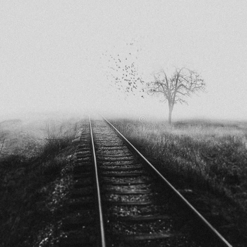 Existencialismo del conjunto muerto de los pájaros foto de archivo
