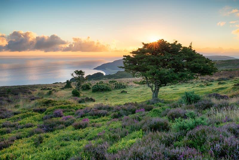 Exmoor Sunrise. Sunrise over Porlock common on the Exmoor coast of Somerset stock photography