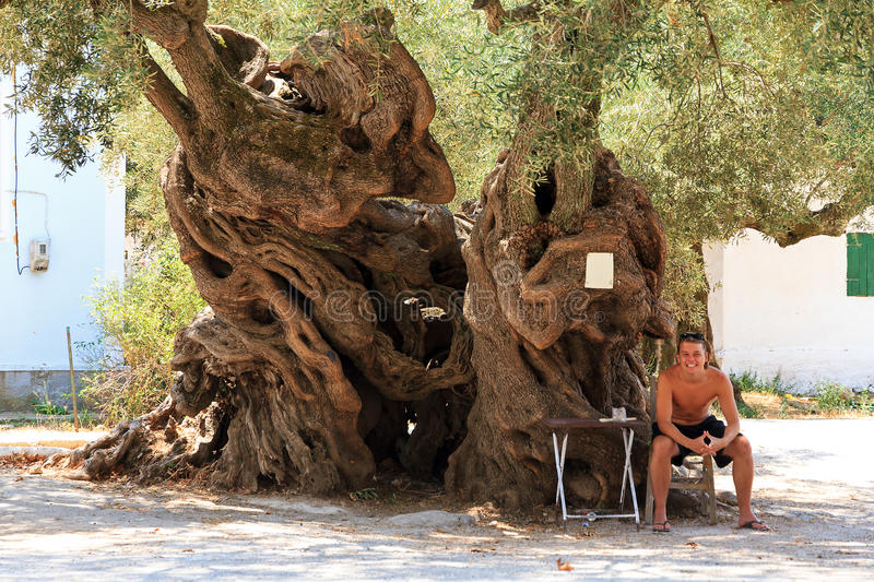 Exo Hora olive tree. Young man sitting next to the 2000 year old olive tree (Olea europaea) in Exo Hora on the island of Zakynthos. It's the oldest tree on the stock images